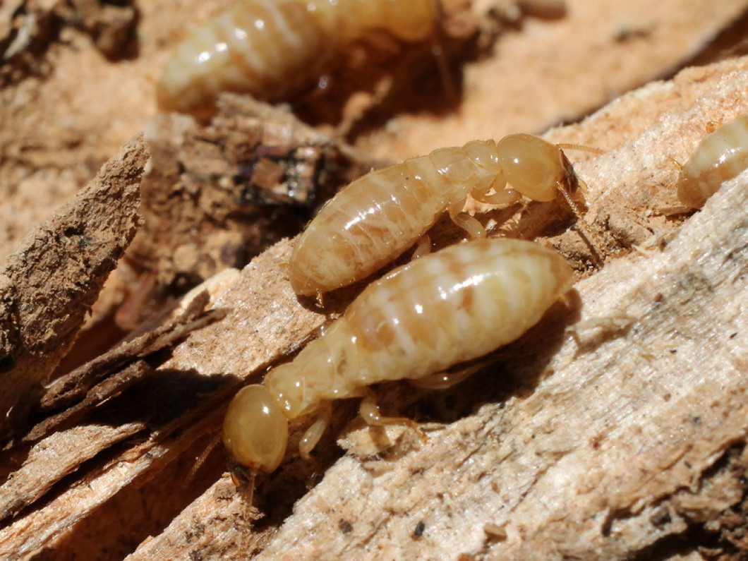Protect Your Property From Flying Termites